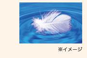水鳥の羽毛